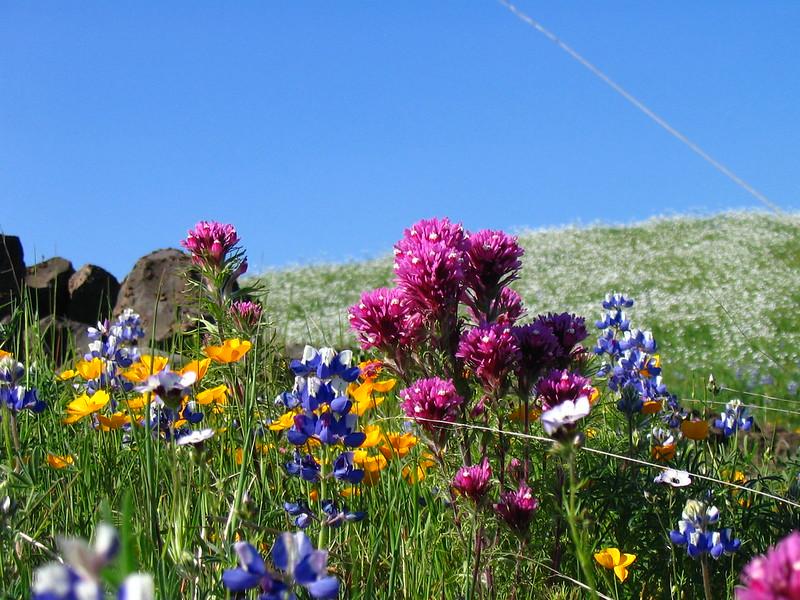 parks-ca-biodiversity-plants-wildflowers